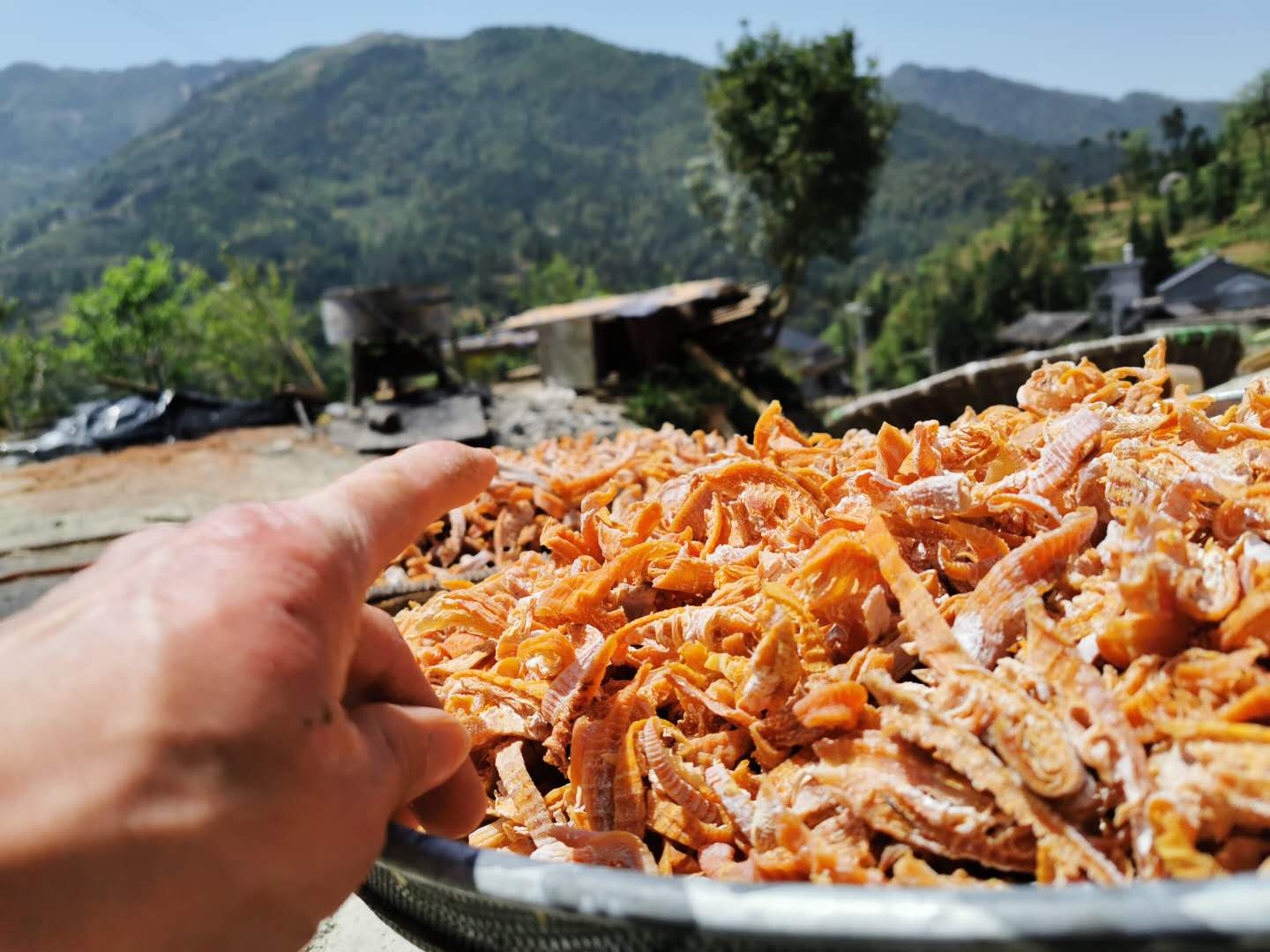 Nongfu mountain village handmade dried bamboo shoots in 2020
