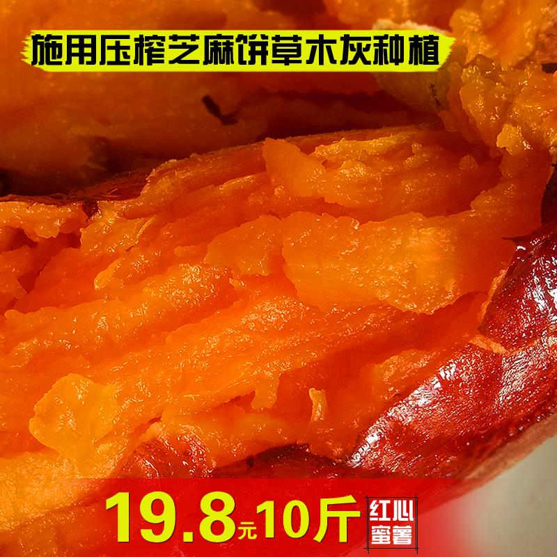 (用10元券)九月新薯农家自种红心蜜署板栗红薯山芋地瓜糖心小香薯10斤装