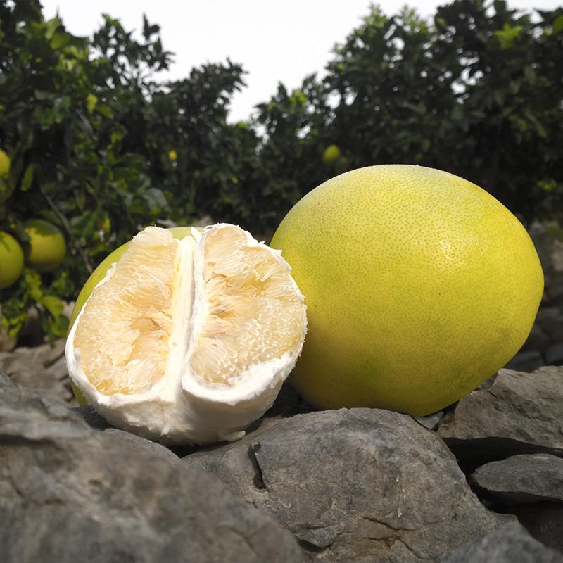 当季新鲜甜柚子白心新鲜白肉蜜柚热带水果应季好吃白心柚5斤包邮