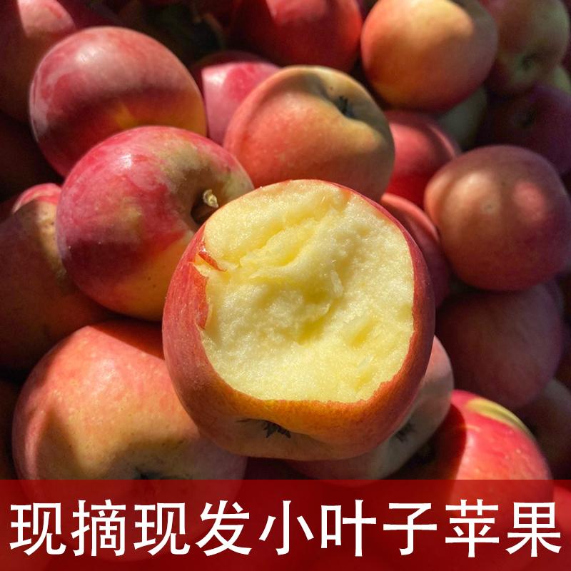 张格庄烟台栖霞苹果水果新鲜一箱当季现货山东小苹果5斤脆叶子