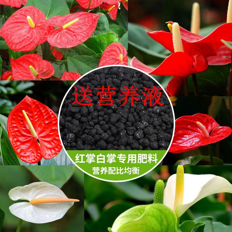 園芸花卉肥料赤掌順風満帆大青葉観葉植物葉肥料緑葉肥料複合肥料