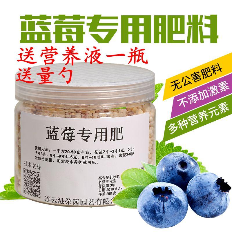 鉢植えブルーベリー庭テラスの果樹室盆栽ブルーベリーの苗は、長効率複合肥料で成長期の多い元素です。