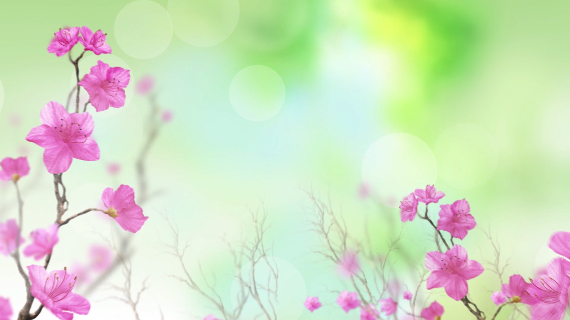 908LED大屏幕高清视频素材唯美春天花朵花卉花开舞台晚会动态背景-视频素材-sucai.tv