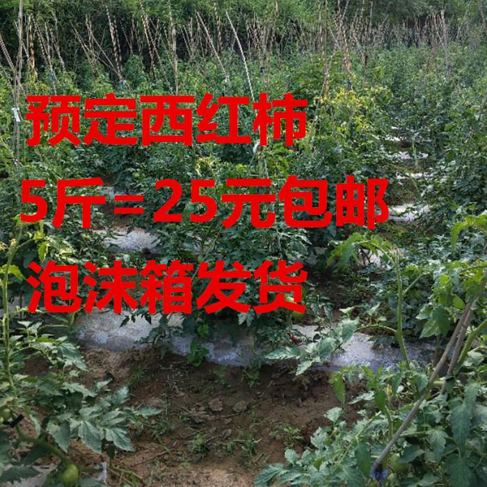 西红柿农家自种西红柿预定5斤包邮沙瓤西红柿