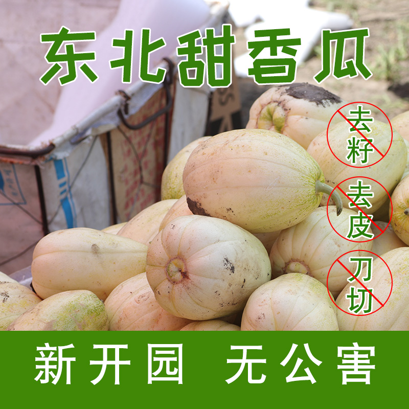东北香瓜 5斤装 东北香瓜 包邮 新鲜 黑龙江水果
