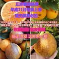 江西赣州赣南脐橙新鲜花斑疤皮丑次水果大小榨汁甜橙子1020斤包邮