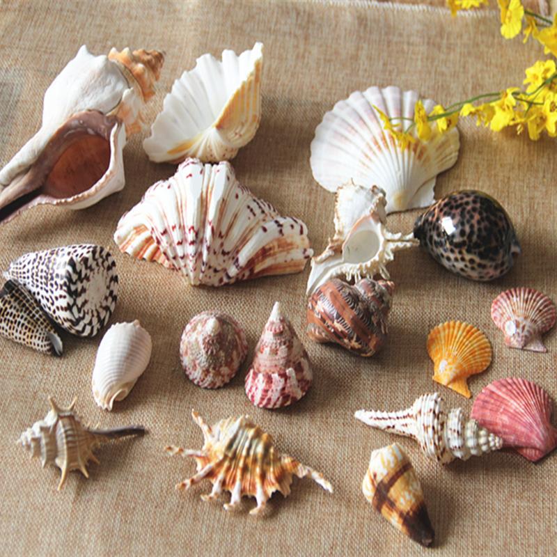 天然海螺贝壳珊瑚水族箱鱼缸造景装饰套装地中海工艺品创意漂流瓶