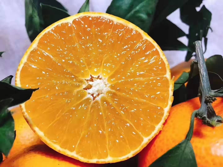 四川爱媛38果冻橙大果顺丰包邮现在现发5斤装应季水果新鲜采摘