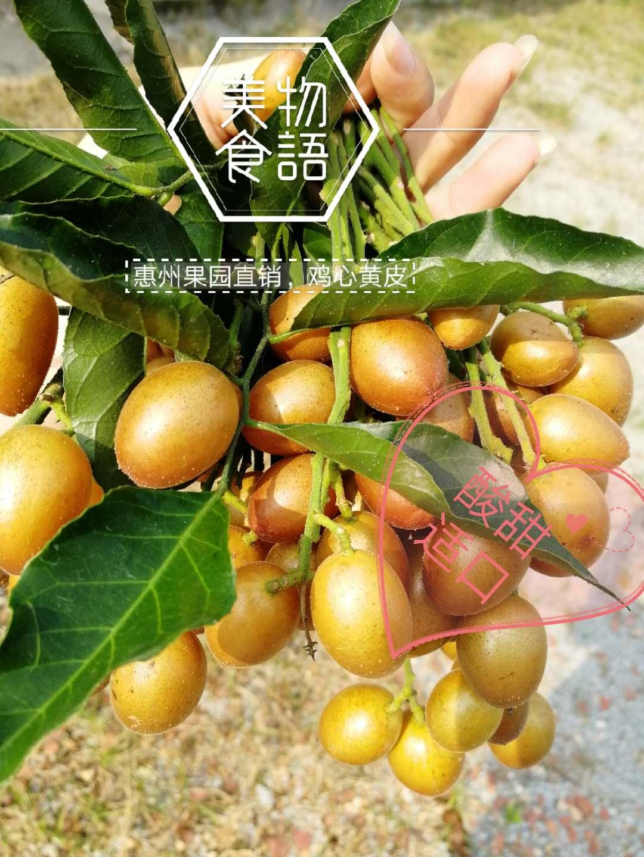 明年6月份广东鸡心黄皮果酸甜适口开胃新鲜水果水果4斤