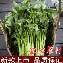 Seeds of Chinese cabbage with willow leaves