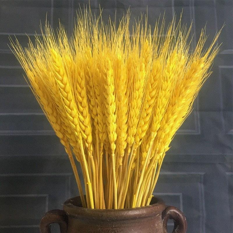 ピータンアート五谷干草飾り大麦の花が着地する犬の尾には、ラベンダーの干し枝があります。