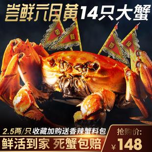 大闸蟹螃蟹鲜活现货包邮14只特大海鲜水产2.5两六月黄清水大闸蟹