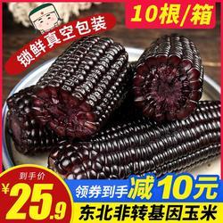 东北新鲜黑玉米糯玉米棒现摘紫香软粘苞米微甜200克*10袋抽真空装