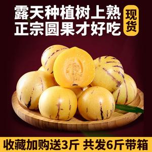 云南石林人参果圆果6斤现摘人生果
