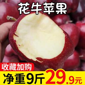 甘肃天水花牛苹果10斤带箱包邮蛇果