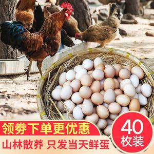 正宗土鸡蛋农家散养新鲜纯农村自养天然草鸡蛋柴鸡蛋笨鸡蛋4
