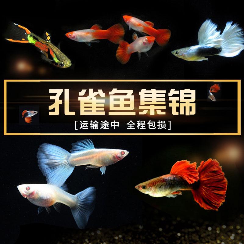 Рыбы Артикул 599086045019