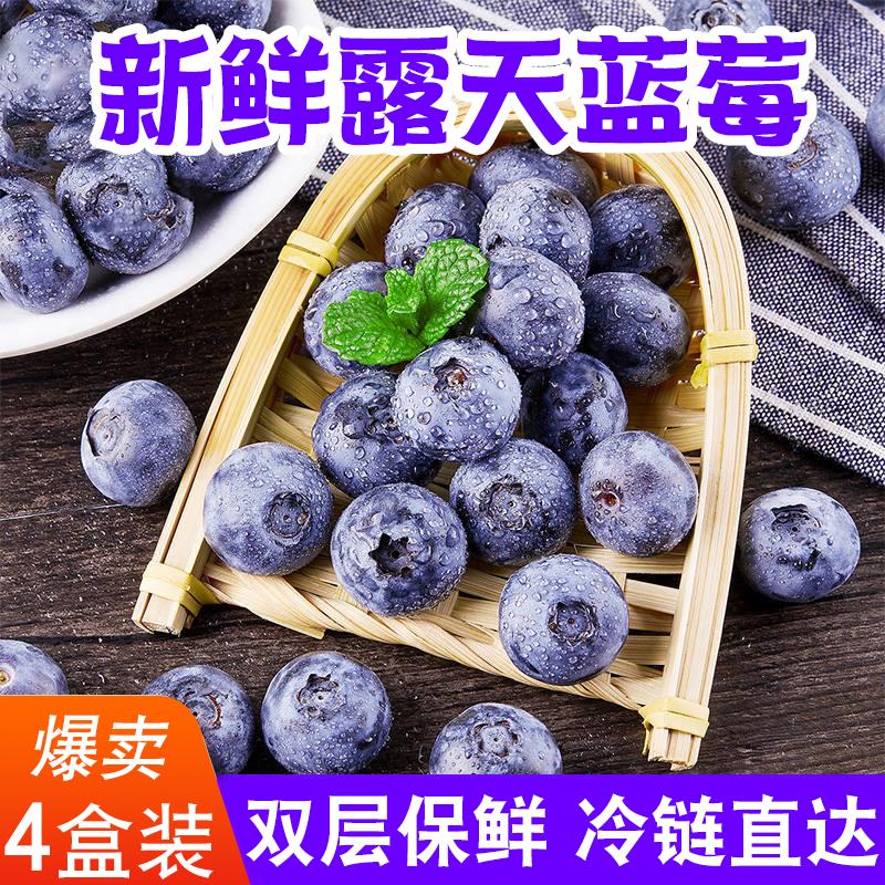 山东沂蒙山现摘蓝莓125g*4盒装蓝莓鲜果新鲜当季孕妇宝宝水果包邮