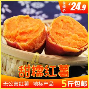 农家自种红薯新鲜板栗薯红心地瓜5斤小香薯糖心地瓜西瓜红薯番薯