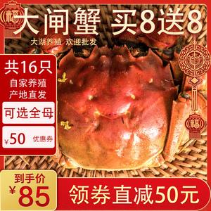 领50元券购买 16只大闸蟹包邮鲜活水产超大毛蟹