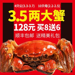 现货大闸蟹大小螃蟹鲜活全母公河蟹礼盒 3.5两超特大蟹 14只