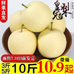 河北皇冠梨子5/10斤新鲜水果脆香梨非砀山梨当季水果礼盒品装包邮
