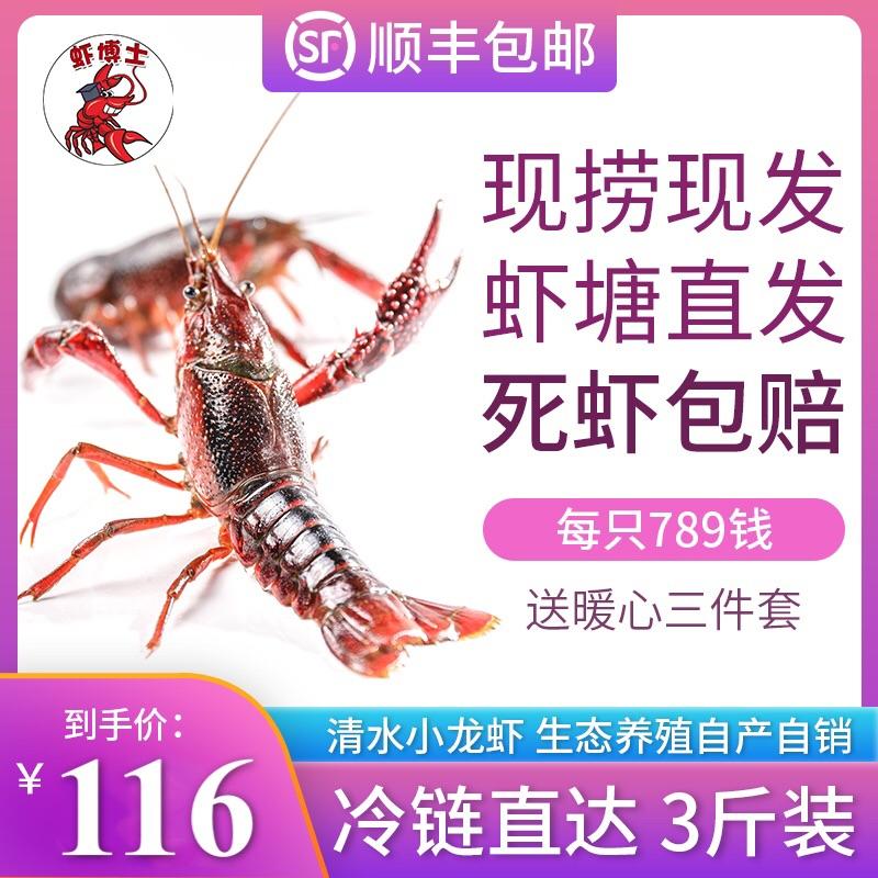 新鲜大号清水养殖小龙虾海鲜水产鲜活龙虾红虾789钱1两3斤包邮