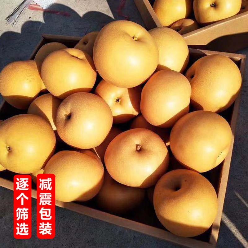 正宗蜜润莱阳秋月梨新鲜10斤日本冰糖梨子水果雪花梨比丰水梨好吃