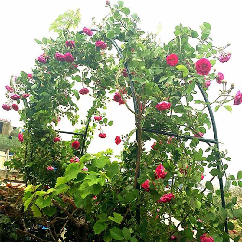 拱形铁艺花架蔷薇月季牵牛花爬藤架田园花园园艺用品婚宴拱门架子