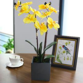 仿真蝴蝶兰仿真花客厅装饰花摆件餐桌摆设花卉塑料假花盆栽手工花图片
