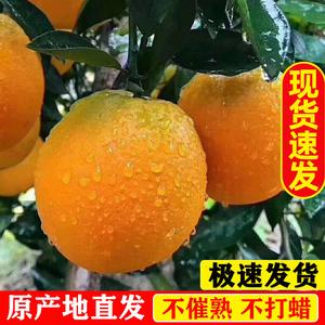 现发赣南脐橙橙子现货新鲜水果果冻脐橙5斤应季夏橙甜10脐橙