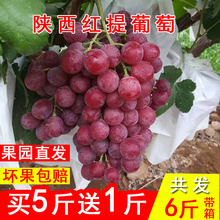 5 jin of Shanxi sweet grape, fresh red fruit, whole box of non seedless Summer Black Jufeng