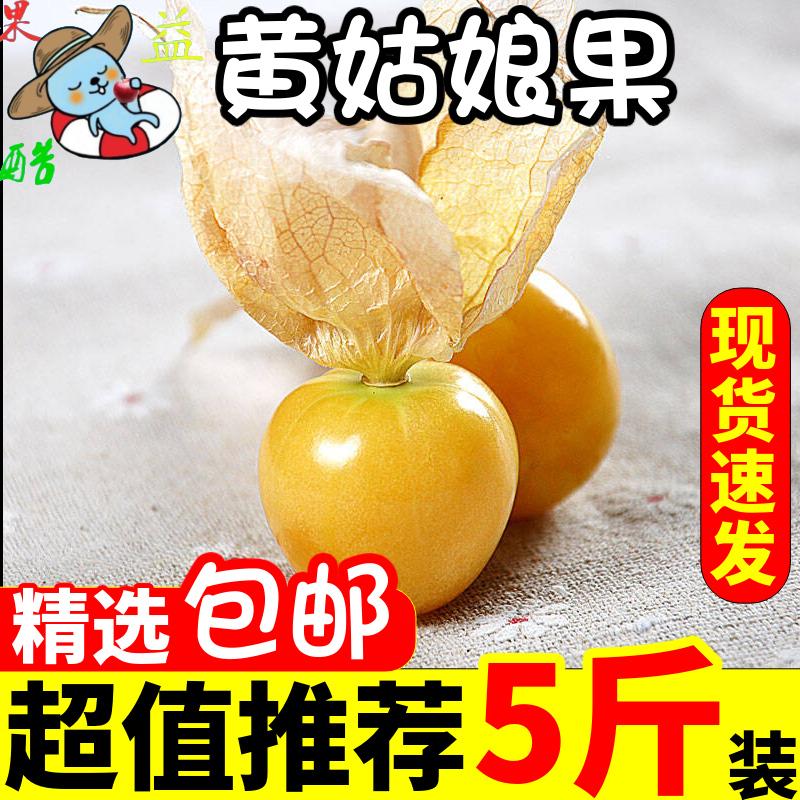 东北姑娘果菇娘果当季新鲜水果应季姑娘果灯笼果特产整箱包邮5斤