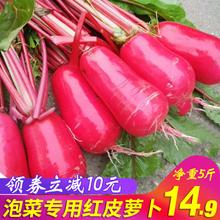 新鲜萝卜 农家红皮萝卜 新鲜红皮白肉水萝卜泡菜胭脂萝卜5斤包邮