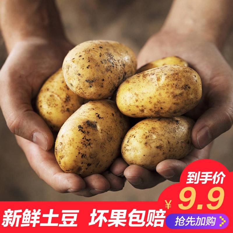 5斤新鲜土豆农家自种非转基因新鲜迷你小土豆新鲜蔬菜马铃薯