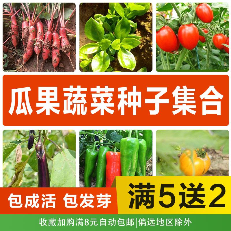 花种籽大全春季播种发芽爆蔬菜种子