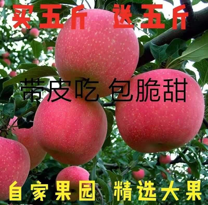 红富士苹果新鲜水果当季冰糖心甜脆10斤带箱包邮大果丑苹果