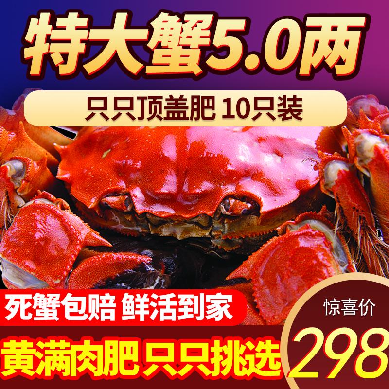 大鲜活清水螃蟹,阳澄湖大闸蟹礼盒