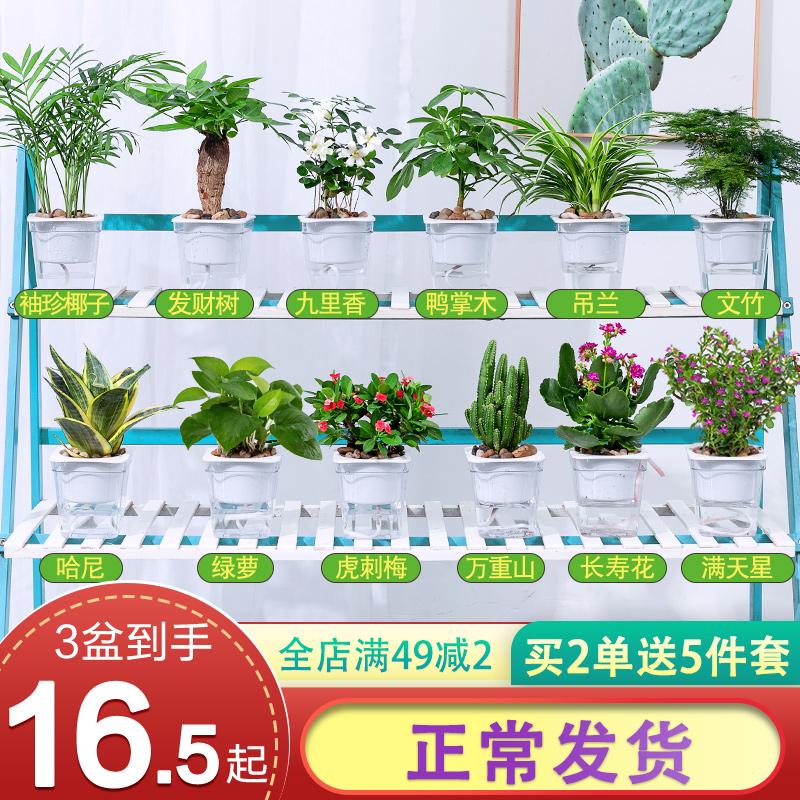 绿萝吊兰多肉发财树花卉盆栽植物室内小绿植去除甲醛文竹水培好养