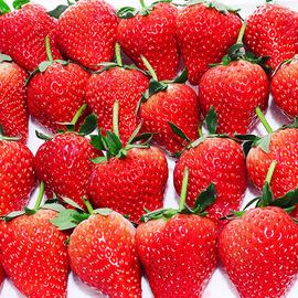 顺丰】四川牛奶99草莓2件发2斤新鲜孕妇当季水果包邮丹东红颜奶油图片