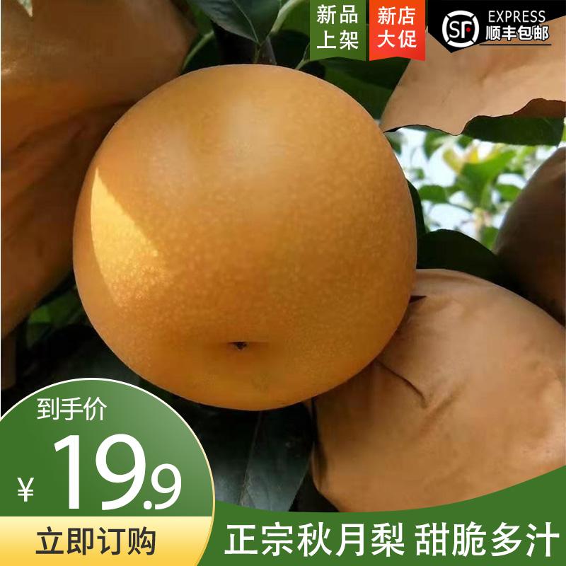 正宗山东胶东秋月梨应季新鲜水果带箱5斤冰糖蜜梨子丰水顺丰包邮