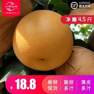 【八闽记忆】正宗山东胶东秋月梨带箱5斤