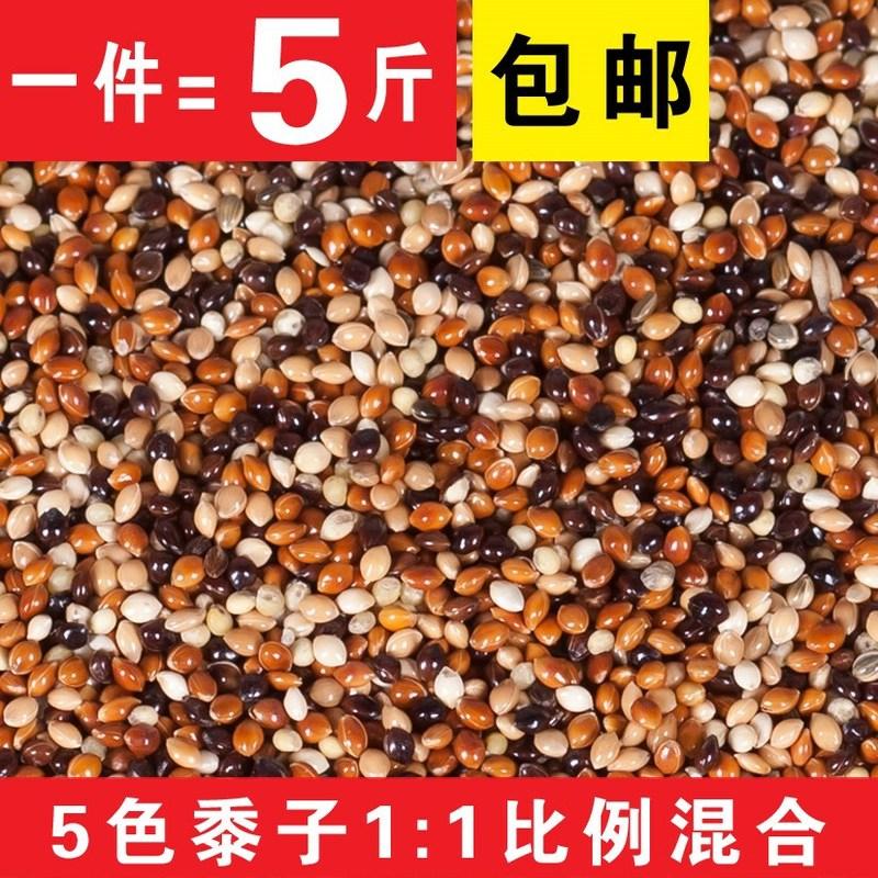 鹦鹉混合粮/鸽粮5色混合黍子/谷子/中小鹦鹉鸟食饲-鸽饲料(青睐家居专营店仅售20.5元)