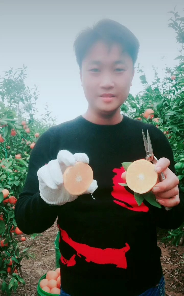 Guangxi wumingwo citrus fresh fruit fresh season big fruit super fruit delicious seasonal fruit pick now package mail