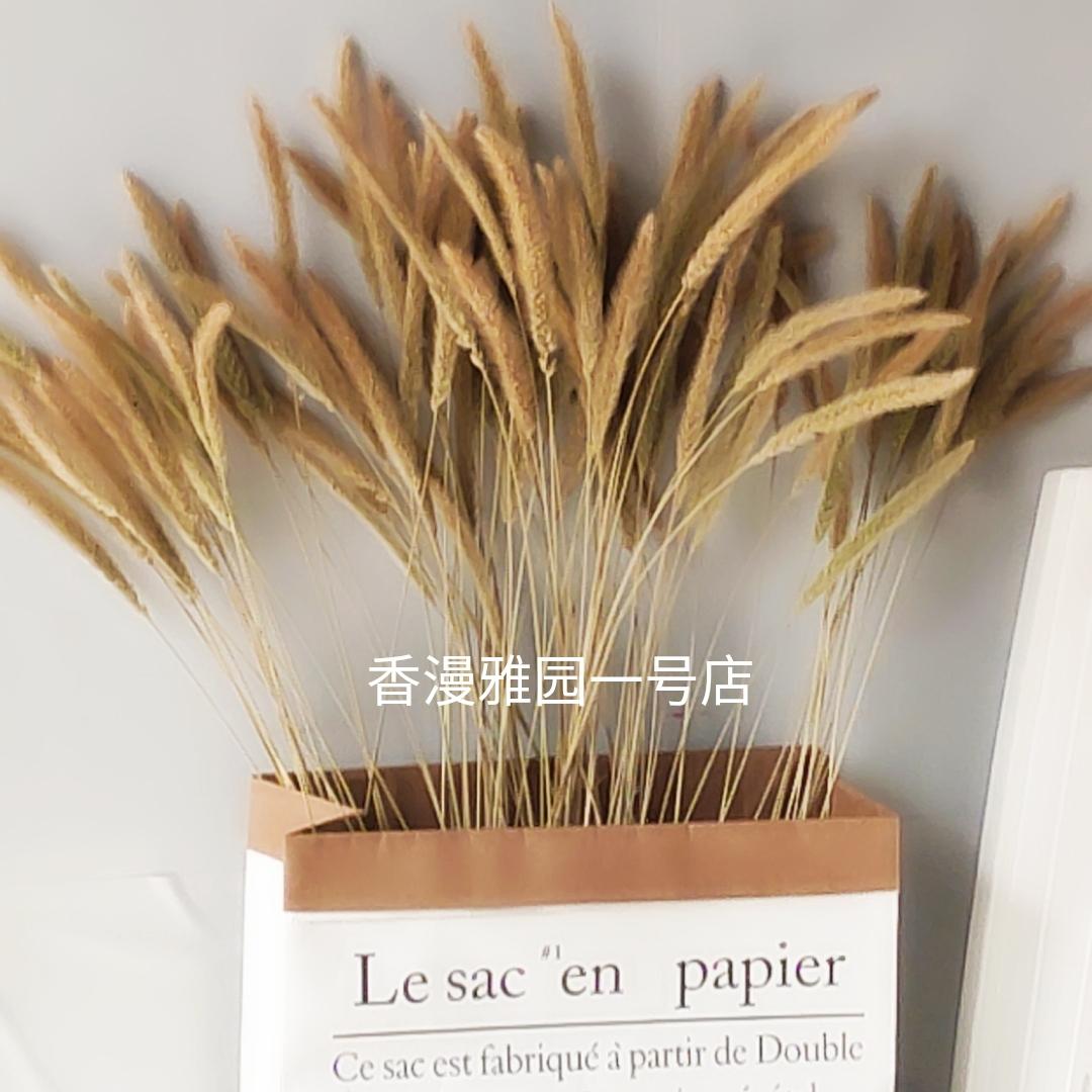 干花永生花文艺装饰咖啡馆拍摄道具清新草天然田园风兔尾狗尾巴草