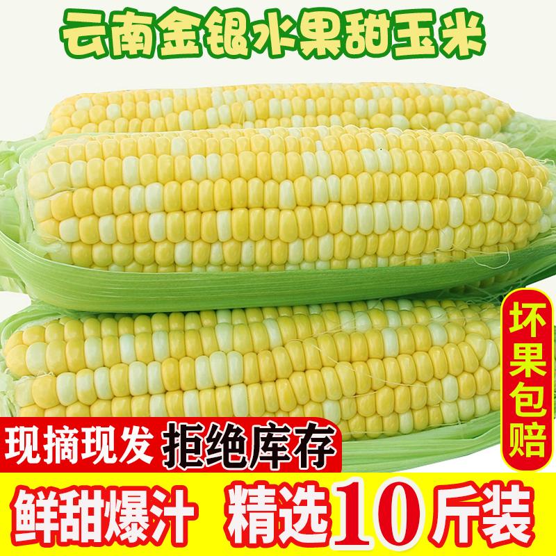 云南金银水果新鲜农家整箱10斤玉米