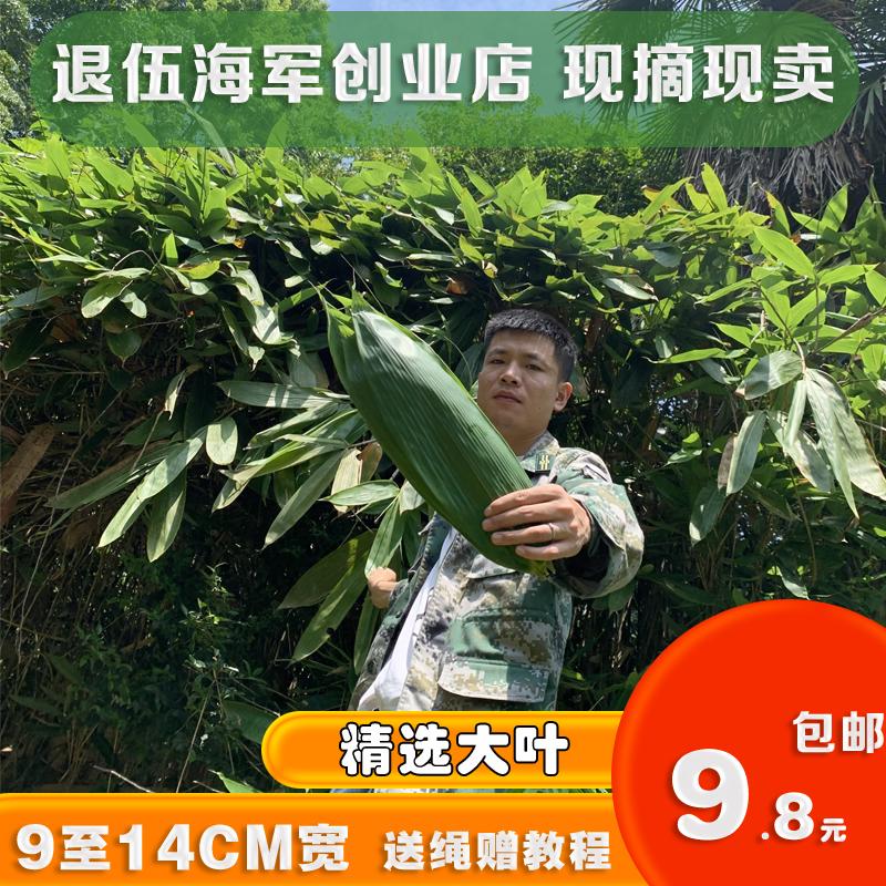 Extra large Zongye Ruo Ye fresh Zongye no mail fresh picked large zongzi leaves Hunan Zongye Ruo bamboo leaves