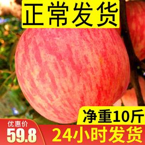 苹果水果新鲜红富士整箱10斤批山东烟台栖霞当季包邮条纹大