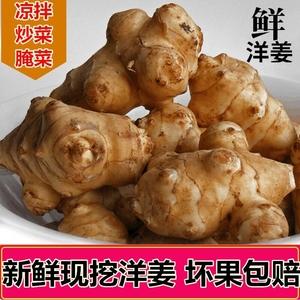 洋姜新鲜现挖5斤菊芋不辣野生酱菜