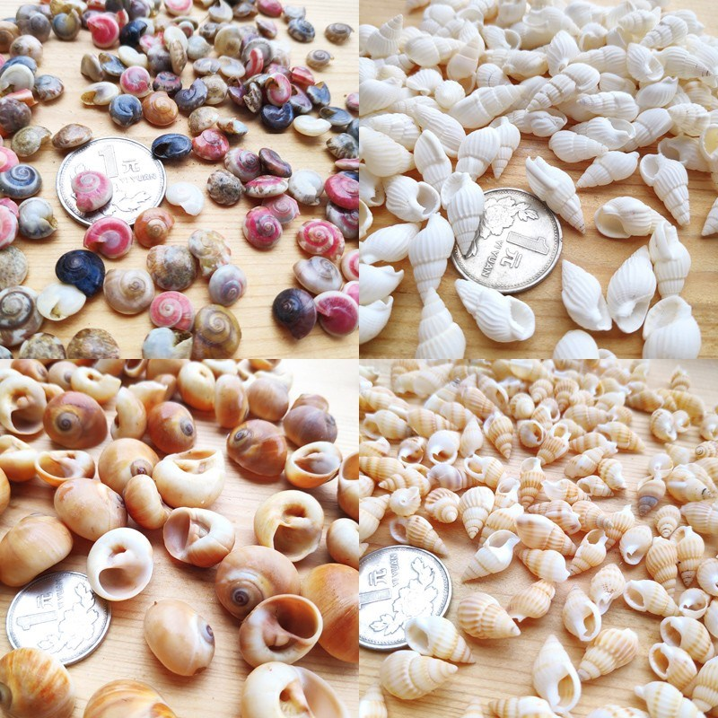 。 1 kg / kg natural conch shell, rice snail and white rice snail DIY handmade material for fish tank platform decoration